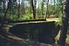 Woodland Bridge (Saturated Imagery) Tags: bridge film 35mm woods roundhaypark roundhay kodakgold100 colournegative c41 pointandclick olympusgo100 filmcompact epsonv500 processedagphotographic