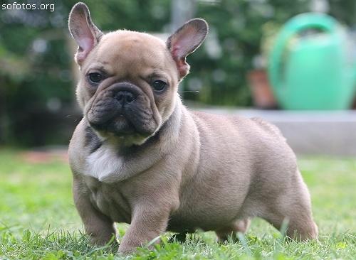 Filhotes de cachorros 16