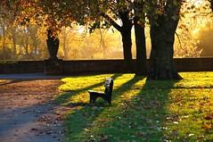 Evening in November (Torsten Reuschling) Tags: park november autumn sunset sunlight fall leaves bench golden evening abend herbst bank dsseldorf rhine rhein golden