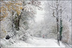 Premire neige (Excalibur67) Tags: winter snow nature forest landscape nikon hiver arbres neige paysage vosges d7100 forts afs1685dxvr