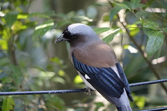 GREEN-WORLD (ddsnet) Tags: bird birds zoo sony hsinchu taiwan cybershot      peipu greenworld bird rx10  zoo zoobird