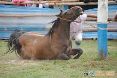 DSC_0084 (AgendaGauchaJujuy) Tags: argentina caballos palenque jinete gauchos jaramillo jujuy tilcara gaucho jineteada tropilla cachullani chucarodeldurazno quebaradehumahuaca