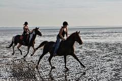Horses (Martin Carey) Tags: uk girls sea england sky horses beach hat canon kent sand gb saddle riders hoofs lyddonsea canoneos60d august182012