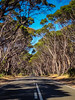 "Typical Kangaroo Island road <a style=""margin-left:10px; font-size:0.8em;"" href=""http://www.flickr.com/photos/41134504@N00/12924779883/"" target=""_blank"">@flickr</a>"