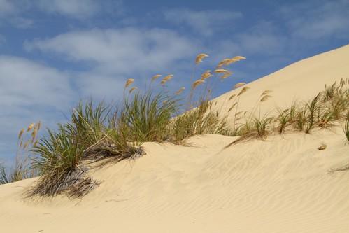 Sanddünen am Ninety Mile Beach