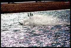 Arbeyal 16 Marzo 2014 (12) (LOT_) Tags: coyote kite photo photographer wind lot asturias kiteboarding kitesurf gijon wavs arbeyal controller2 element2 switchkites nitro3
