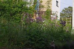 Vorgarten (daanca) Tags: loffenau unsergarten