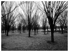West Potomac Park (daveelmore) Tags: park trees winter bw washingtondc blackwhite bare branches nationalmall westpotomacpark dioramaartfilter mzuiko918mm