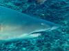 Grey Nurse Shark (allenhaggerty00) Tags: southwestrocks greynurseshark