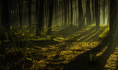 Enchanted Forest (paulosilva3) Tags: world mist nature up forest sunrise landscape warm lee filters enchanted