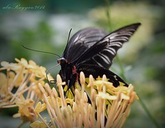 butterfly1.21 (aburayyan) Tags: park flowers trees plants nature birds wings nikon df colorful butterflies nectar fullframe nikkor fx dx
