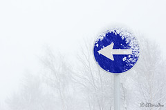 one way obligatory direction traffic sign with blizzard (Mimadeo) Tags: blue winter white snow leaves sign turn way one traffic symbol snowy icon direction roadsign oneway arrow signpost obligatory blizzard signal signboard directional