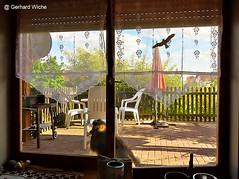 Ruheplatz (GerWi) Tags: sky dog sun nature outdoor natur himmel indoor hund zaun sonne dany terasse ruheplatz sonnenschirm