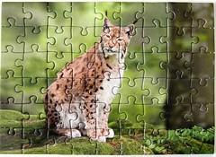 Luchs / Lynx (Leonisha) Tags: puzzle lynx jigsawpuzzle luchs