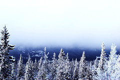 White Winter (linneasnow) Tags: wood blue trees winter sky cloud white mist snow cold tree ice nature norway fog clouds forest photography photo woods pretty foggy trysil engerdal