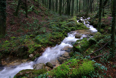 Rego da Fraga (f@gra) Tags: wood water rio river landscape spain sony silk paisaje galicia bosque pontevedra fraga silkeffect