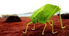(timetomakethepasta) Tags: new york green nature closeup insect outdoors bright katydid organism