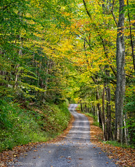 Country Road (KRHphotos) Tags: road nature forest landscape us unitedstates fallcolors westvirginia dirtroad elkins monongahelanationalforest