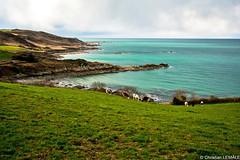 Baie de Quervire - Eculleville (christian_lemale) Tags: sea mer bay coast cow cte vache baie cotentin baiedequervire quervire eculleville