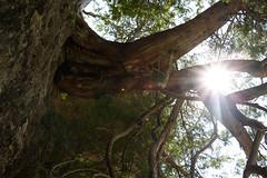Rockwood_2016_09 (rdaniel2) Tags: tree sun flare forest branch sunny bright