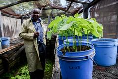 Bean power in Tanzania