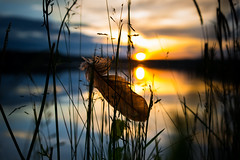 Day and Night (--Conrad-N--) Tags: sunset lake reflection grass night clouds see day dof bokeh bad feather reflexion kurort feder scharmtzelsee saarow