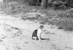 8259.CAT (Greg.photographie) Tags: nikon nikonfe nikkor 50mm f18 film analog foma 100 r09 noiretblanc bw blackandwhite cat chat