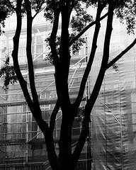 (monsieur ours) Tags: bw nb tree arbre silhouette street rue ville city