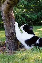 Scratching Tree (Jamo Spingal (J McGonigal)) Tags: tree cat sony smudge nex emount minoltaceltic mcminoltaceltic28mmf28