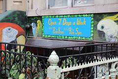 E9thSt (51) (ShellyS) Tags: nyc newyorkcity manhattan eastvillage buildings wallart murals streeets
