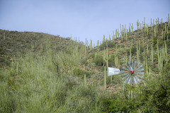 Superstition Mtn 25 (Largeguy1) Tags: cactus windmill canon landscape mark iii mtn 5d superstition