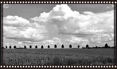 Landschaft in s/w (isajachevalier) Tags: blw natur wolken sachsen landschaft bume allee schwarzweis