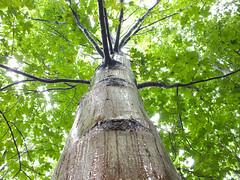 tree weep (beimpressed) Tags: tree weep criy hot baum wasser sweats outdoor after rain