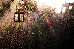 Sweet summer showers (Captions by Nica... (Fieger Photography)) Tags: summer rain water showers garden flowers lantern sun sunbeam sunlight light tree treebranches sprinkles outdoor