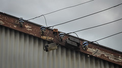 Almost Music (Theen ...) Tags: adelaide cables chapelstreet corrugated electric factory fascia framework greysky insulators iron lumix music roof shed staff thebarton theen