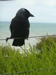 Cliff Top Visitor (bimbler2009) Tags: sky bird outdoor wildlife urbannature panasoniclumix