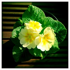 Garden Flowers on the Deck I (billyrosendale) Tags: flowers garden pot gardenflowers potflowers