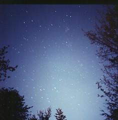 (Alex Musgrave) Tags: longexposure trees 120 6x6 film night analog mediumformat stars tripod hasselblad f28 500cm hasselblad500cm kodakportra160 1minuteexposure zeissplanarcbt80mmf28