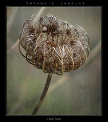 Summer's remains #3 (www.xavierfargas.com) Tags: autumn stilllife naturaleza flower fall nature season flor snail panasonic otoo hdr estacin caracol naturalezamuerta photofiltre photomatix 1xp xfp bej abigfave dmcfz50 lumixdmcfz50 anawesomeshot theunforgettablepictures platinumheartaward macromarvels goldstaraward spiritofphotography iwbt vosplusbellesphotos dragondaggerphoto artofimages flickrclassique xavierfargas sailsevenseas p1160227 autumnsremains
