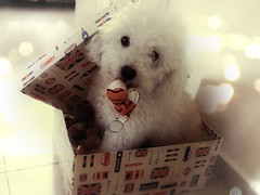 Toy box. (P! Pics) Tags: bear dog cute love toy furry bokeh box tiger jhonny