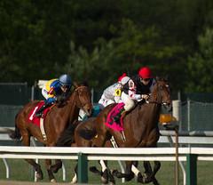 2013 Pimlico Racetrack (maskirovka77) Tags: horse grass racetrack race mare maryland races turf stallion racehorse thoroughbred pimlico horserace horseraces gelding garrow