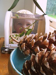 Oscar's praying mantis (Heart felt) Tags: boy pet bug oscar child insects prayingmantis preschooler unusualpets