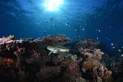 2013 05 METTRA OCEAN INDIEN 2966