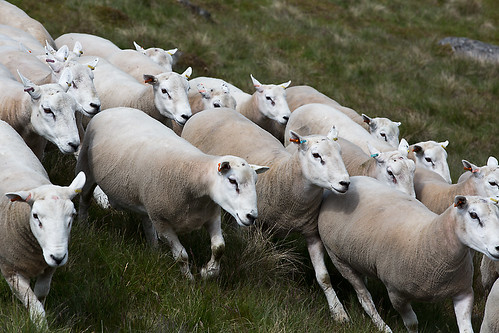 tups running in grass