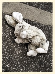 Lost rabbit (To Whom This May Concern) Tags: rabbit bunny abandoned animals copenhagen denmark toy lost stuffed forgotten stuff behind left dropped missed droppedstuff