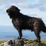 Dougal air Beinn Dubh a' Bhealaich thumbnail