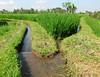 Subak Irrigation Channels, near Ubud, Bali (BaliAdelaide) Tags: bali indonesia rice farming irrigation subak