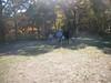 GreyhoundPlanetDay2010004