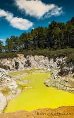Sulfur Pool (David Capellari) Tags: newzealand david pool yellow volcano neon sulfur wonderland thermal vulcano waiotapu capellari davidcapellari