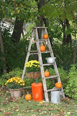 5127 Fall Deco (wantadog) Tags: pumpkins mums ladder sprinklingcan